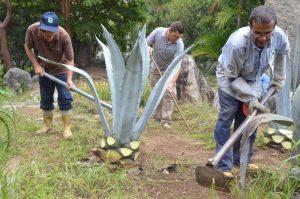 Embellecen espacios del Parque Generalísimo Francisco de Miranda