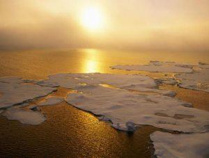 Calentamiento global perjudicará 79% de las especies del océano