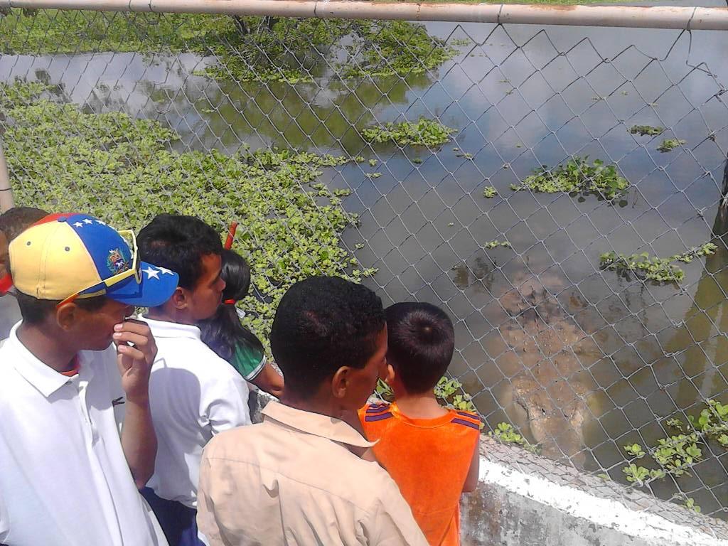 En Apure alumnos de la Escuela Taller San Fernando conocieron al caimán del Orinoco