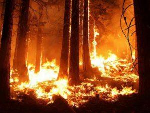 Huracanes, incendios y calor: mejor nos vamos acostumbrando