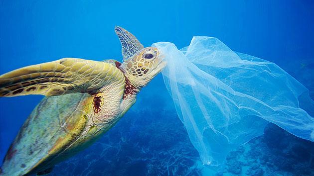Chile será el primer país de América en prohibir bolsas de plástico en sus costas