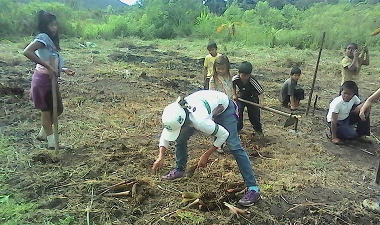 Inparques Bolívar realizó recolección de semillas en comunidad indígena del Parque Nacional Canaima