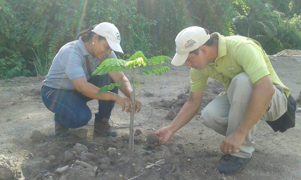 Servidores de Inparques Anzoátegui verificaron reforestación en Guanta