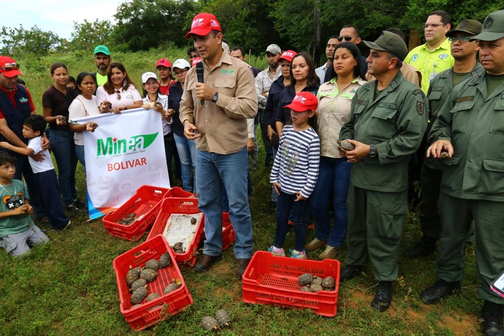 Ministro Velásquez Araguayán participó en la liberación de 1.059 morrocoyes en el municipio Heres de Bolívar