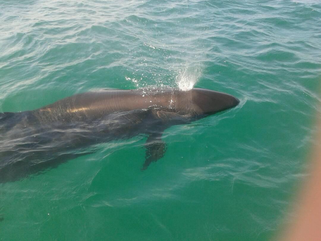 Manada de delfines llega al Parque Nacional Morrocoy