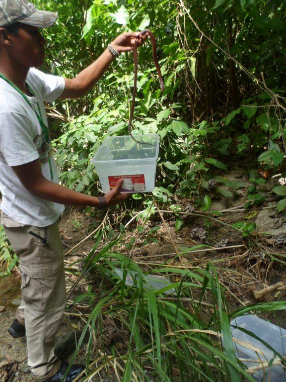 Inparques liberó serpientes en zona boscosa del Parque Nacional Yurubí en Yaracuy