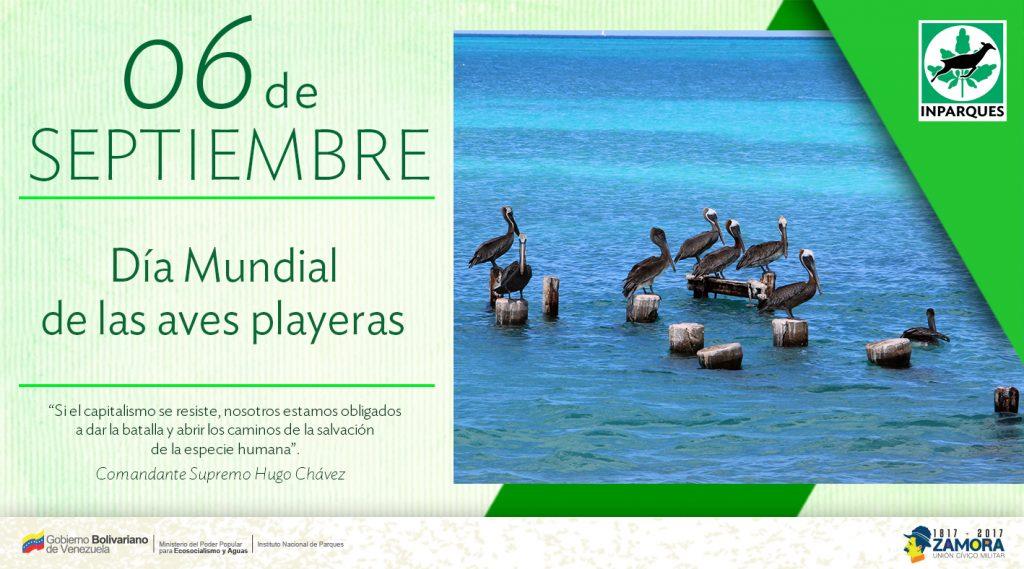 Las nómadas aves playeras