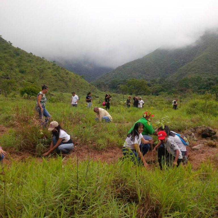 Minea reforestó en el Parque Nacional Henri Pittier