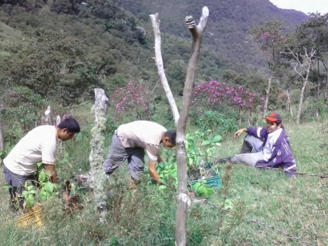 Minea realiza plantación de especies forestales en nacientes de agua en Táchira