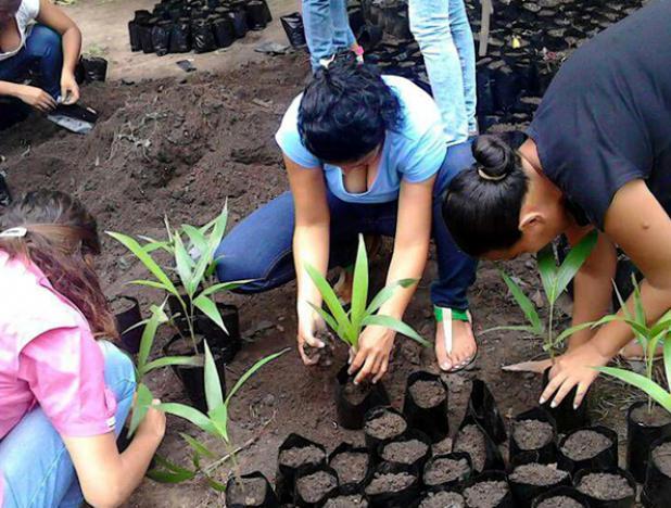 Plan Chamba Juvenil agroecológico se desplegó en 11 estados