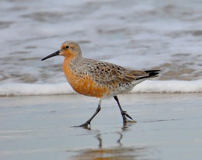 Más de 20 especies de aves migratorias llegan al Parque Nacional Médanos de Coro