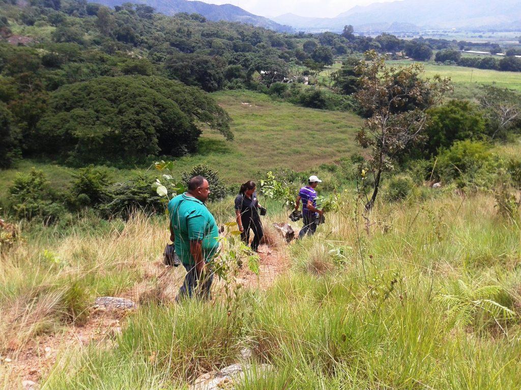 Minea ejecuta el Plan Nacional de Reforestación en Aragua