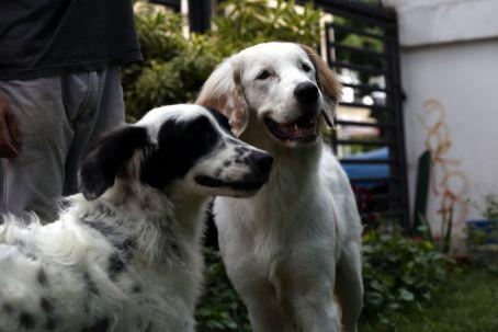 Misión Nevado entregará propuesta constitucional para la protección animal