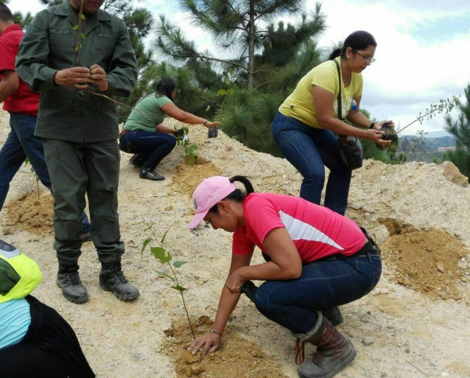 En Miranda fueron plantados cinco mil árboles forestales