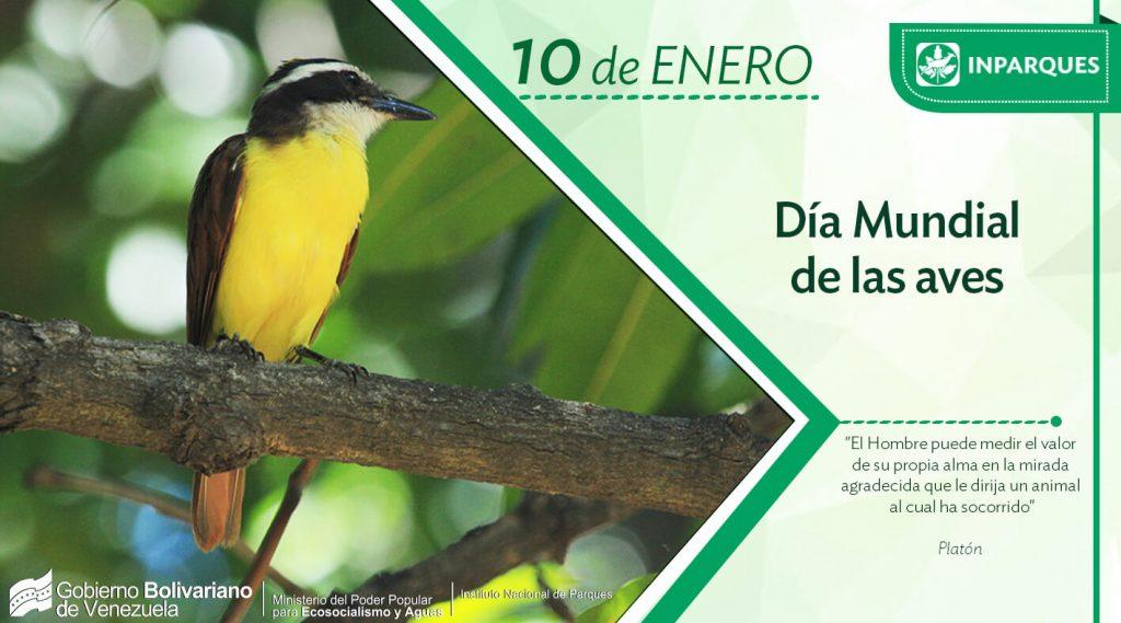 Venezuela celebra el Día Mundial de las Aves
