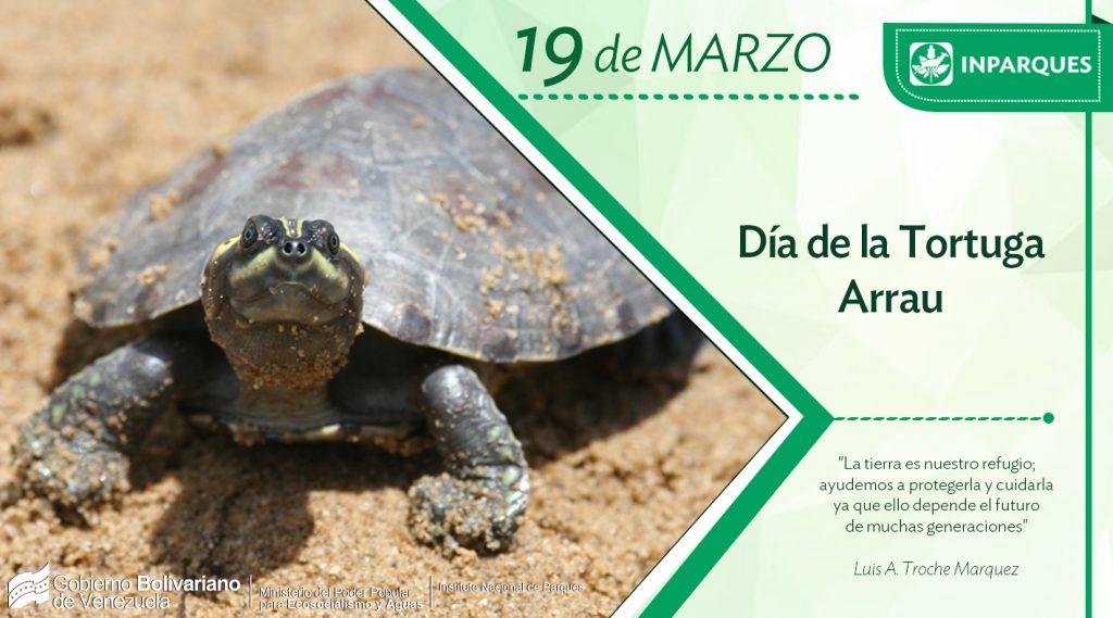 Venezuela conmemora el Día de la Tortuga Arrau para proteger la especie