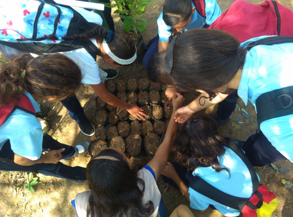 Comienza plan de Propagación de Especies Forestales en el Jardín Xerófito de Coro
