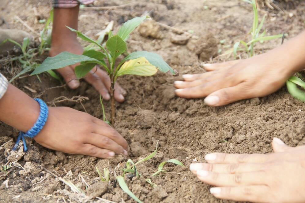 Con la siembra de árboles celebraron el Día Mundial de la Tierra en Lara