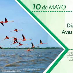 Día Mundial de las Aves Migratorias, un vuelo necesario para el planeta