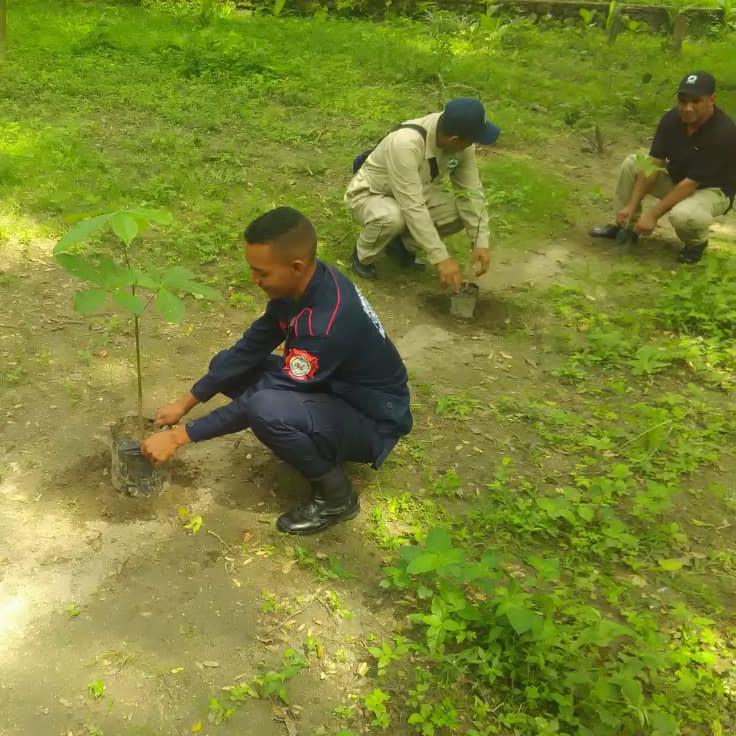 Centros educativos de Yaracuy conmemoraron Día Nacional del Árbol