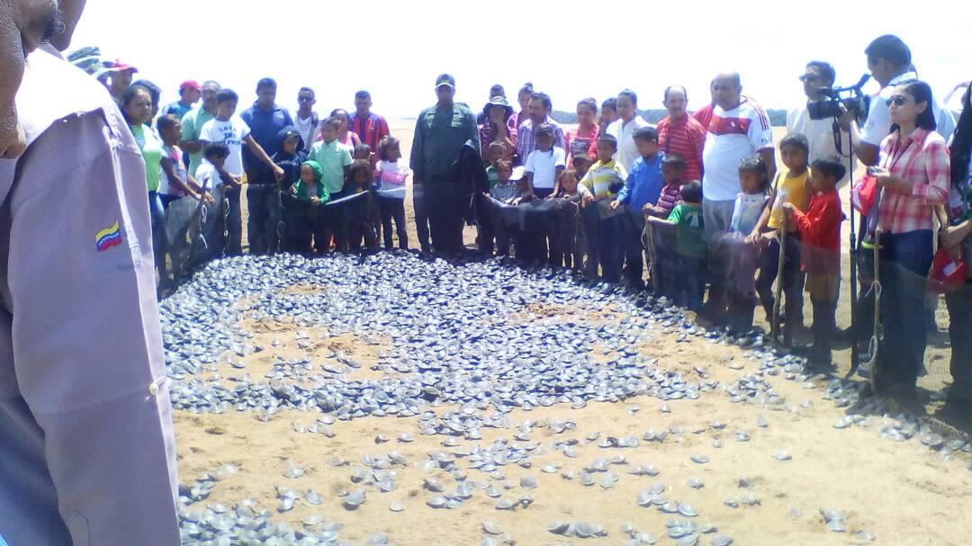 Liberados 30 mil tortuguillos arrau en el río Orinoco