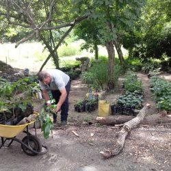 Desarrollan actividades ambientales para embellecerel Parque Cumaripa