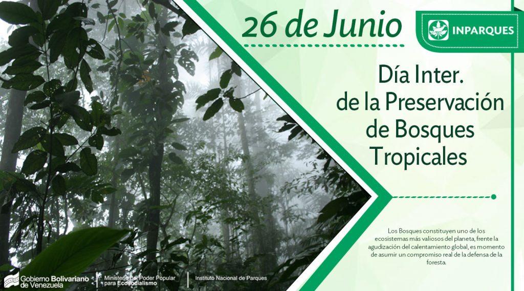 Hoy se celebra el Día Internacional de la Preservación de los Bosques Tropicales