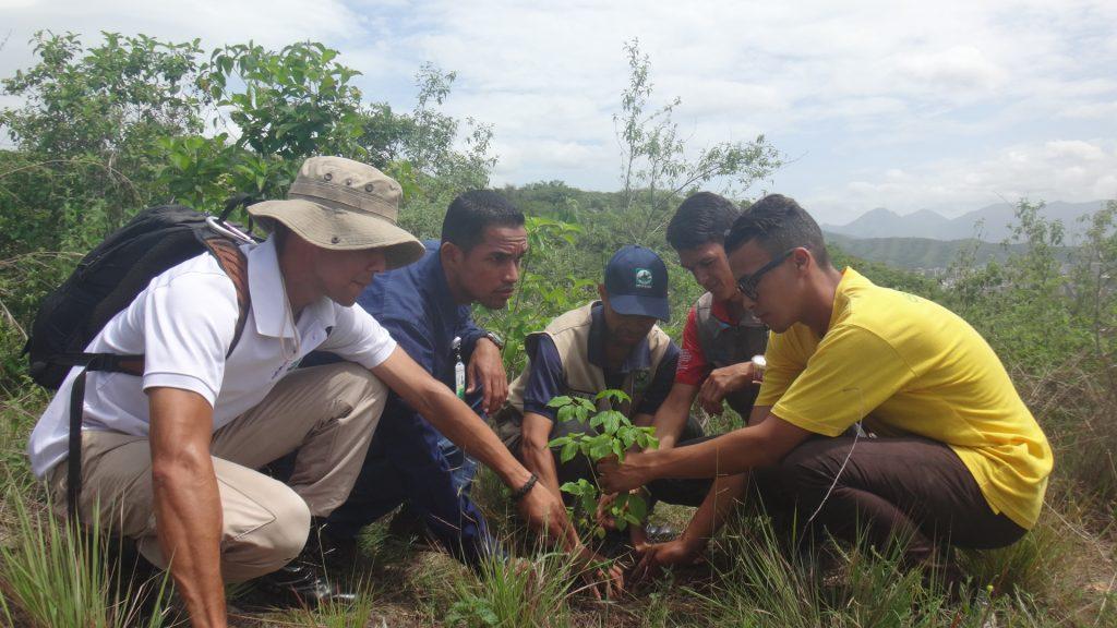 Inparques participó en jornada de reforestación al cerro La Guacamaya