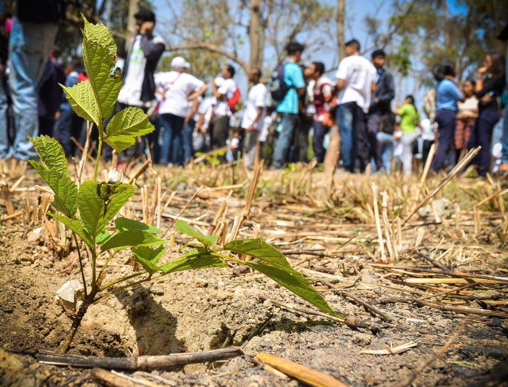 Reforestan áreas del Parque Nacional Waraira Repano por aniversario de la Misión Árbol