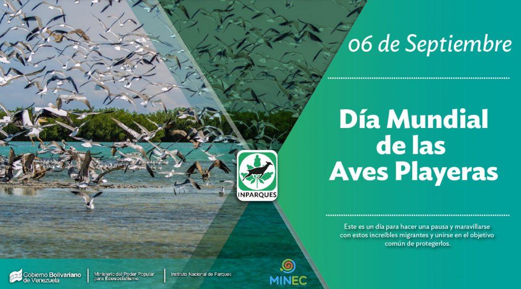 Hoy se celebra el Día Mundial de las Aves Playeras