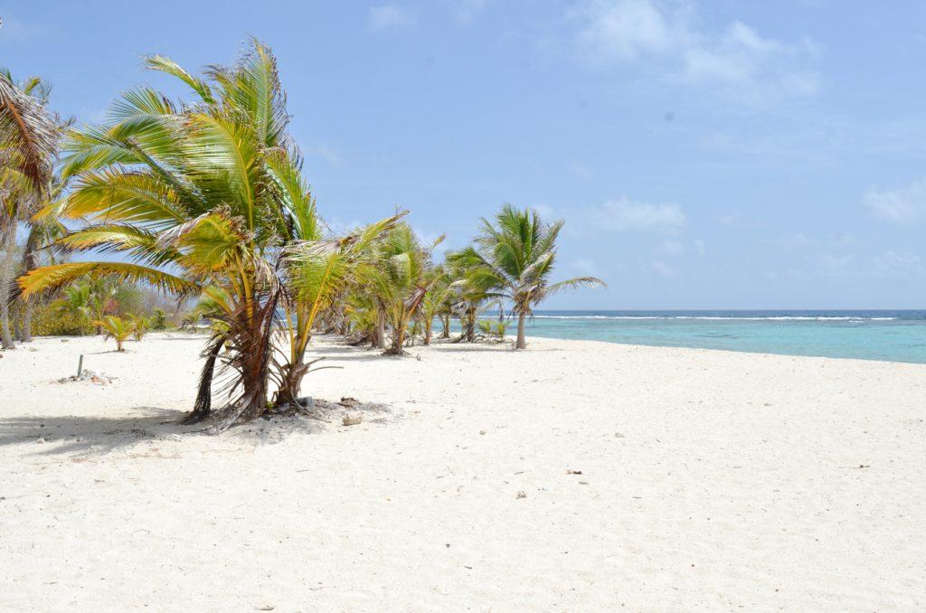 Heryck Rangel: Con jornada de saneamiento ambiental celebramos Día Mundial de las Playas en todo el país