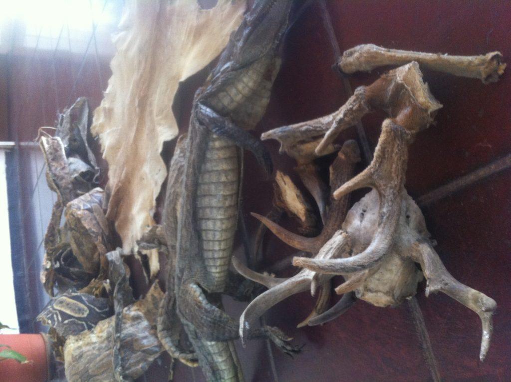Minec decomisó 21 productos derivados de la fauna silvestre en mercado de Puerto La Cruz