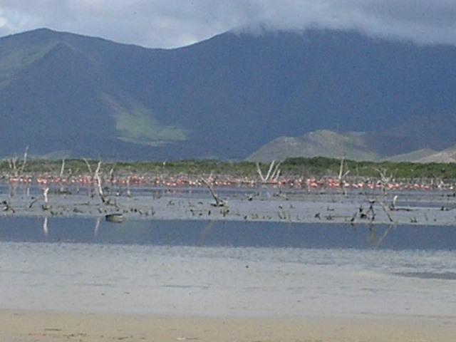 Ejecutaron jornadas de monitoreos de avifauna en Nueva Esparta