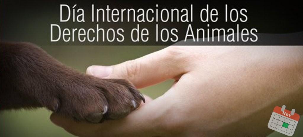 10 de diciembre: Día Internacional de los Derechos de los Animales