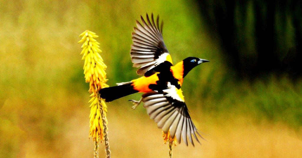Inparques celebra el Día Mundial de las Aves