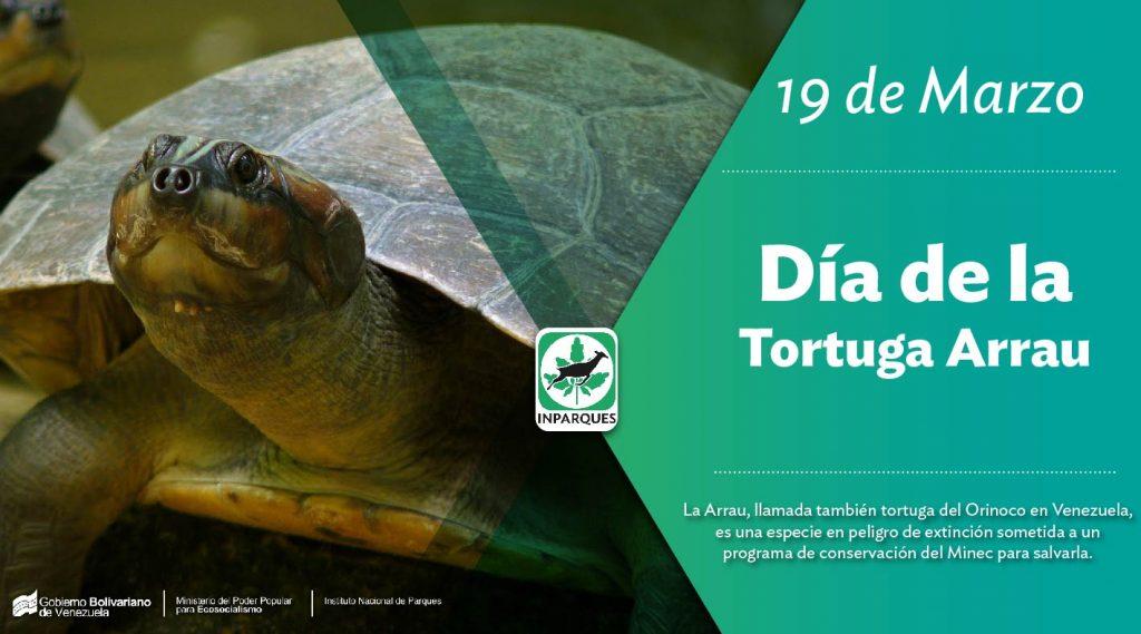 Venezuela conmemora el Día Nacional de la Tortuga Arrau