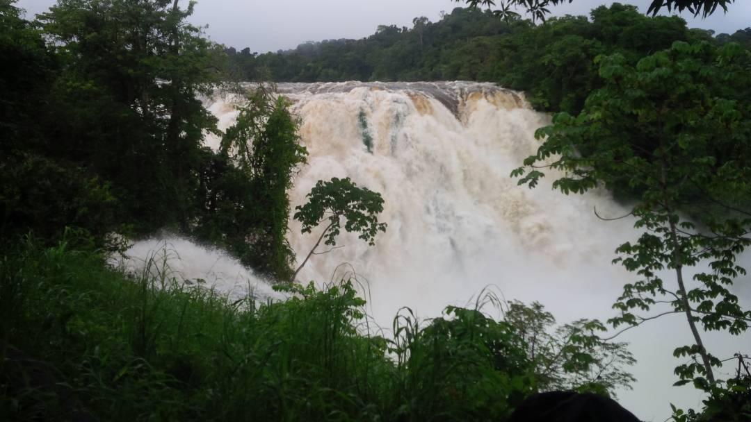 Gobierno Bolivariano conmemoró creación del parque boscoso más grande del mundo