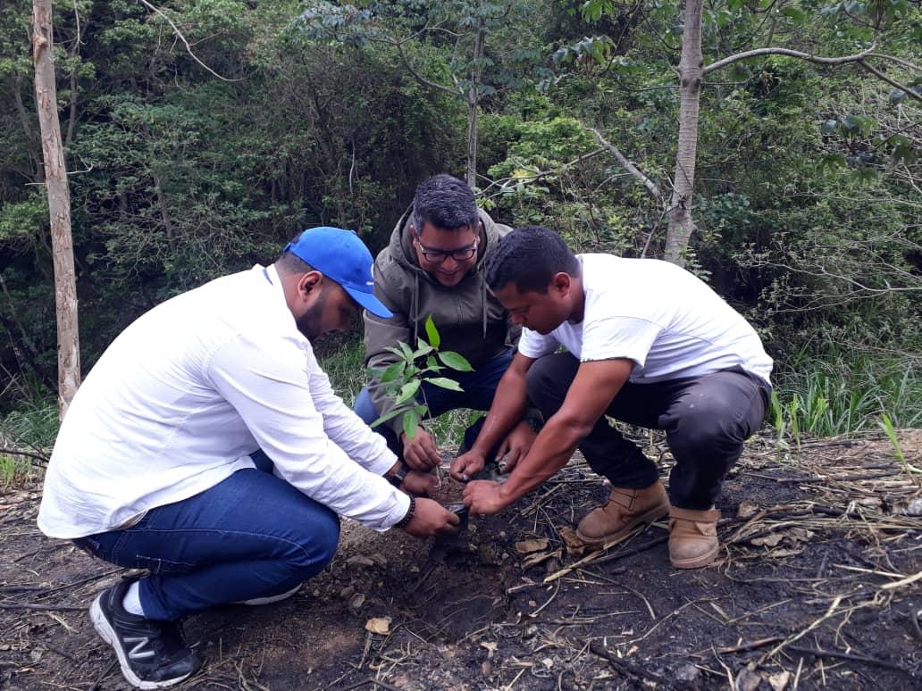 Minec e Inparques efectuaron jornada de reforestación en el Waraira Repano