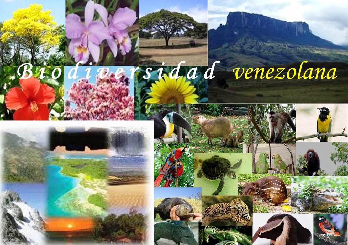 22 de mayo: Conmemoración del Día Internacional de la Diversidad Biológica