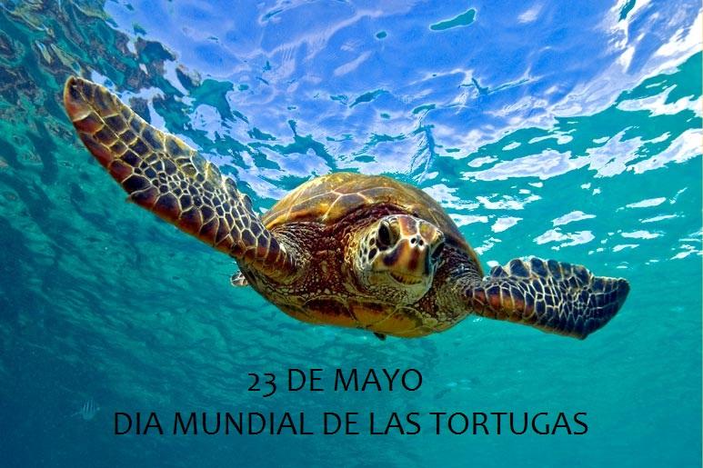 Día Mundial de las Tortugas: Distintas especies repartidas en diferentes ecosistemas del mundo