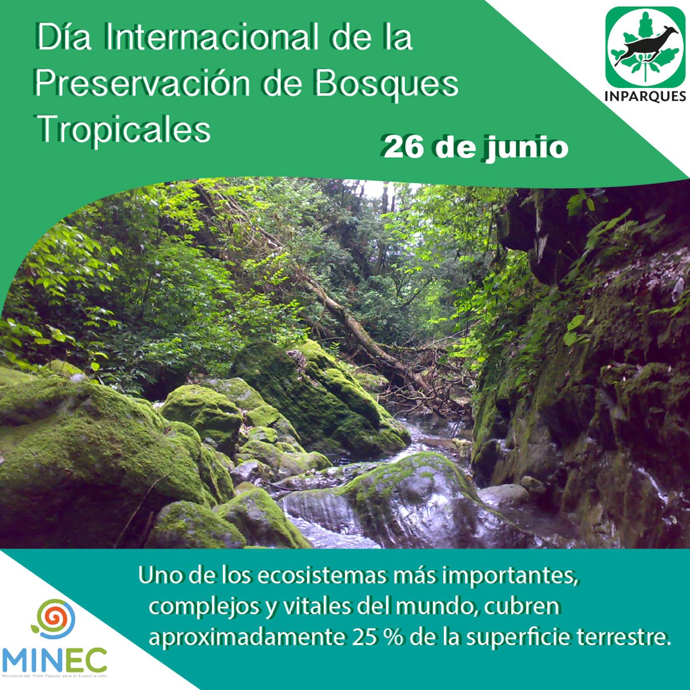 El 26 de junio de cada año está dedicado a los bosques tropicales