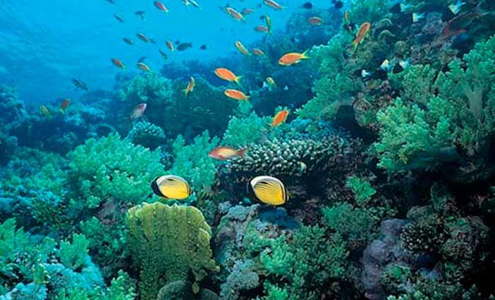 El Día Mundial de los Océanos convoca a detener la contaminación por plásticos