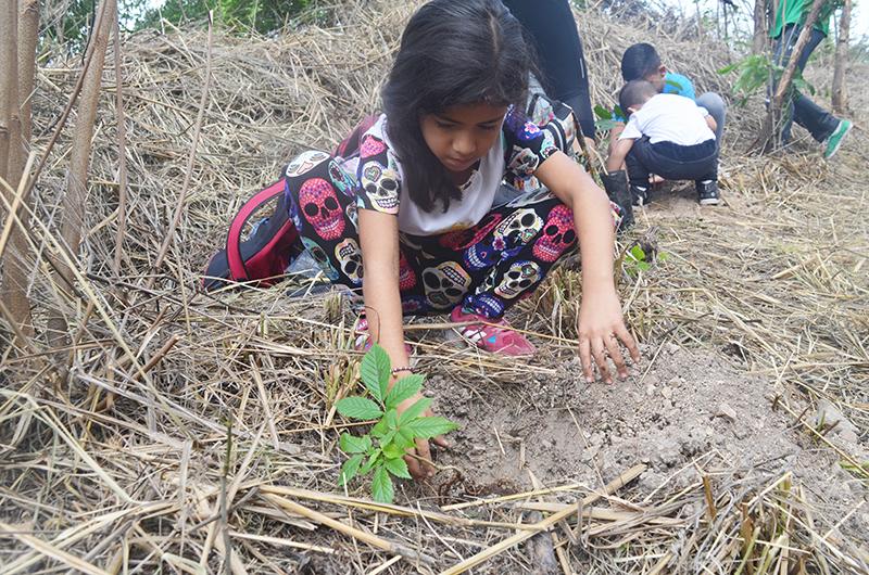 Inparques impulsa Estrategia Nacional de Reforestación en el Parque Nacional Waraira Repano