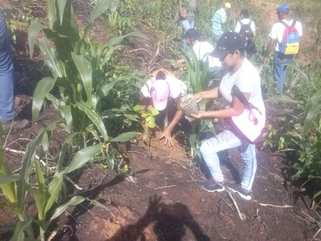 Comunidad de Casupal reforestó sus espacios con apoyo de Inparques