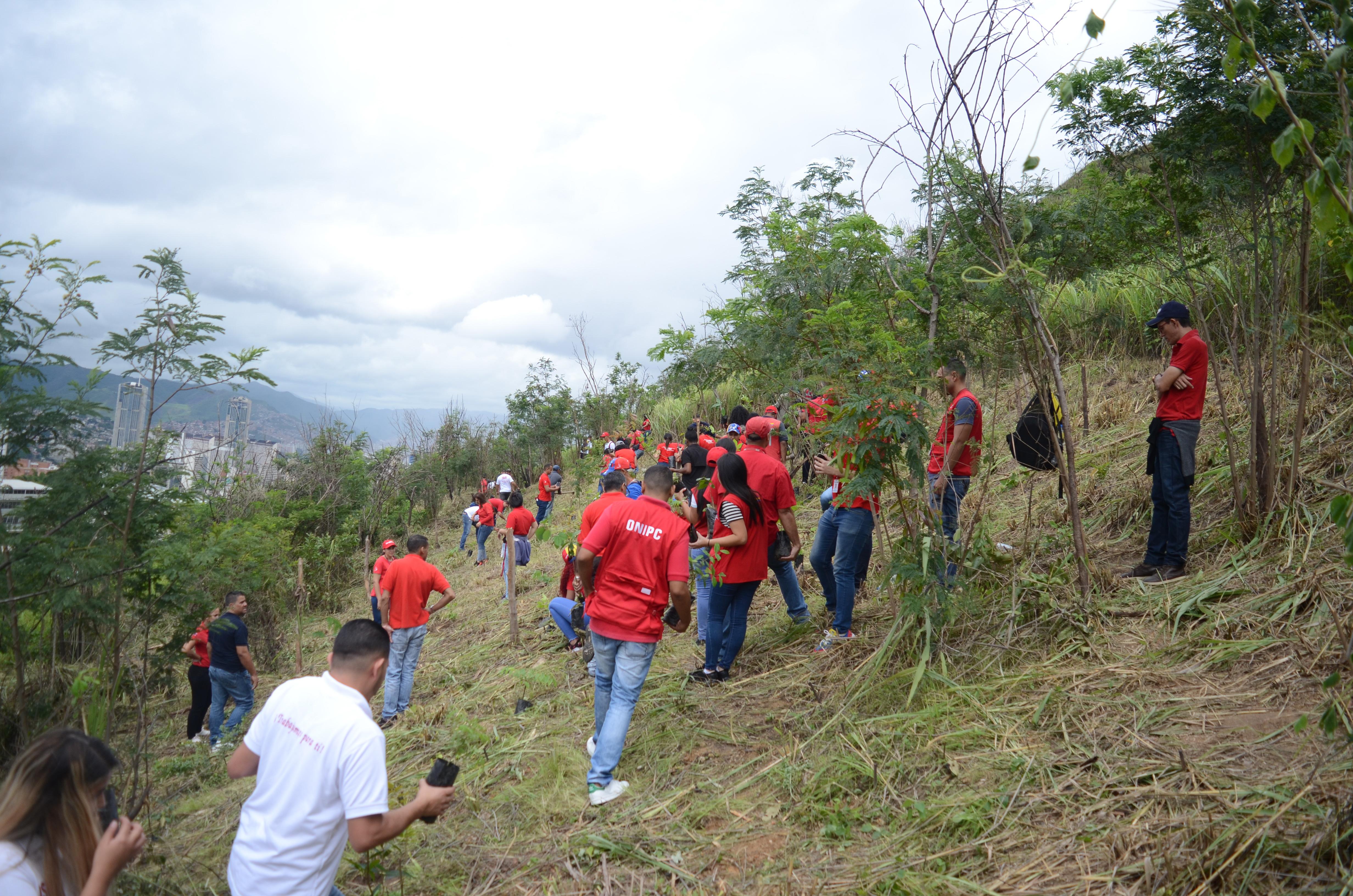 Seniat e Inparques plantaron 200 árboles en el Waraira Repano